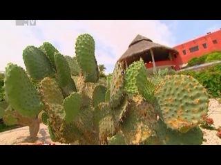 Каникулы в Мексике - 26 выпуск